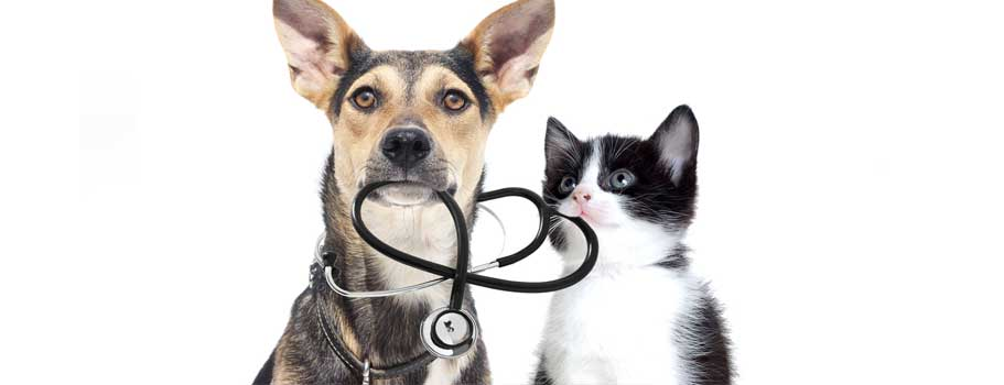 Where to Buy Cheap Pet Medication Online?