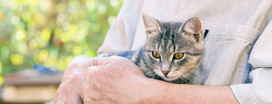 More on Effective Cat Arthritis Medicine