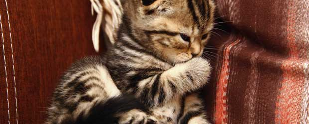 Common Cat Diseases And Their Treatment