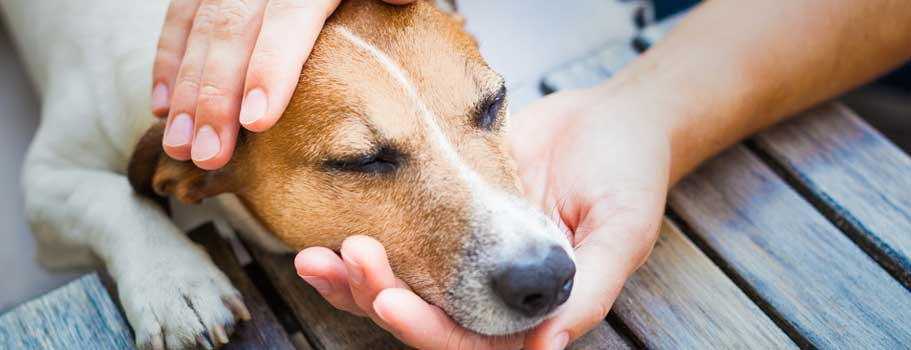 Heartworm Treatment for Dogs