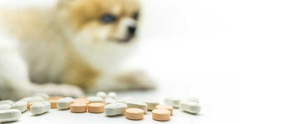 Buying pet meds without vet prescription